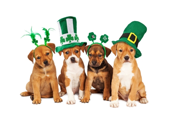 Large St Patricks Day Dog