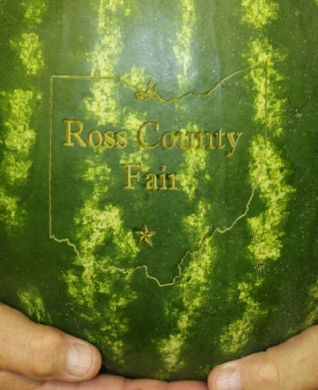 A watermelon for the Ross County Fair!